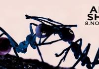 SABATO 08 NOVEMBRE, ANTS SHOW